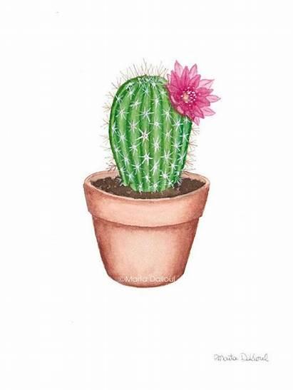 Cactus Watercolor Drawing Succulent Succulents