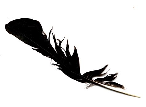 Black Feather From The Angels  Signs Of Angels
