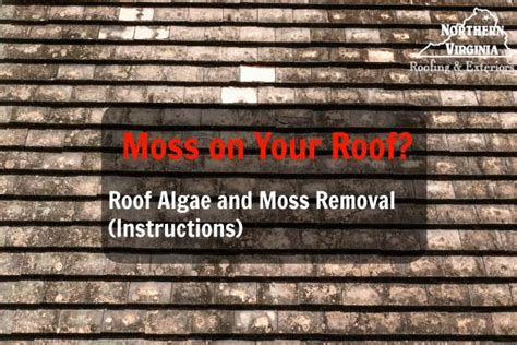 Moss On Your Roof? Algae & Roof Moss Removal Tips How To Get Rid Of Roof Rat Red Pittsburgh Spray Foam Insulation Under Metal Clay Tile Life Expectancy Repair Asphalt Mountain States Roofing Cincinnati Cedar Shake Shingles
