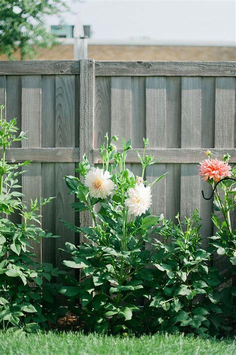 how do you grow dahlias how to grow dahlias wit delight garden pinterest dahlias to grow and how to grow