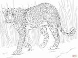 Leopard Coloring African Pages Printable Drawing Skip Main Paper sketch template