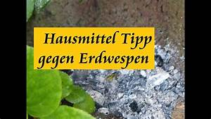 Was Tun Gegen Holzwürmer : tipp gegen erdwespen youtube ~ A.2002-acura-tl-radio.info Haus und Dekorationen