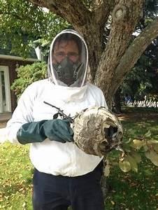 Détruire Un Nid De Guêpes : d truire un nid de gu pe conseils d exterminateur ~ Melissatoandfro.com Idées de Décoration