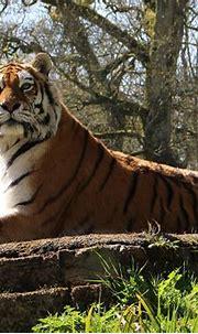 7 Best Wildlife Sanctuaries in North India - National Park ...