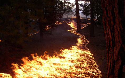 hd forest fire trail wallpaper
