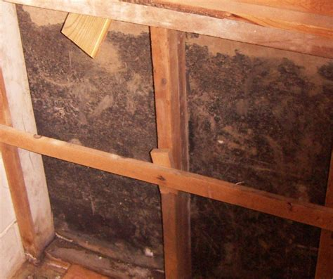 Mold Pro Inc Toxic Mold Inspections And Testing On