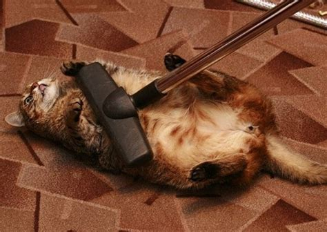 Funny Pictures Cat Vacuum Cleaner Cats Funny