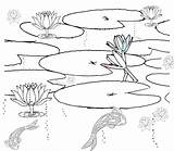 Pond Coloring Pages Habitat Printable Realistic Drawing Clipart Fish Colouring Ponds Habitats Sketch Plants Lily Print Clip Duck Getdrawings Getcolorings sketch template