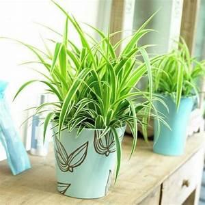 Große Zimmerpflanzen Wenig Licht : 5 pflegeleichte zimmerpflanzen f r anf nger ~ Markanthonyermac.com Haus und Dekorationen