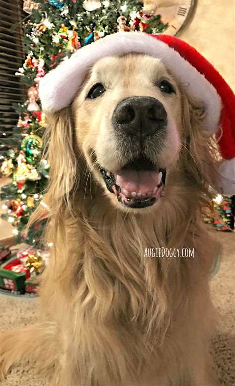 images  christmas  animals  pinterest