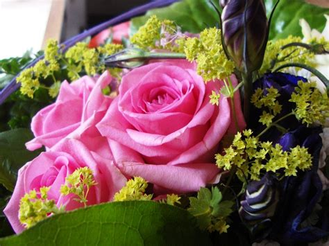 kostenlose rosenbilder blumenbilder rosenbilder
