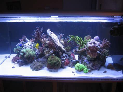 aquarium cylindrique acrylique 28 images personnalis 233 cylindrique acrylique aquarium r