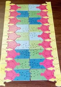 DNA and RNA Models
