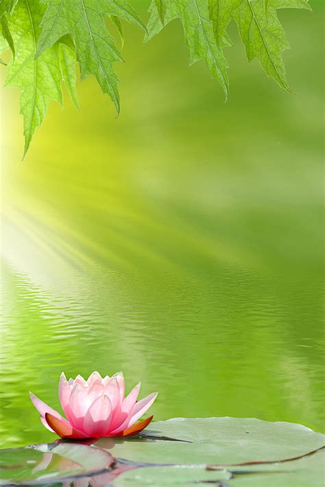 solo lotus pond wallpaper for wall decor
