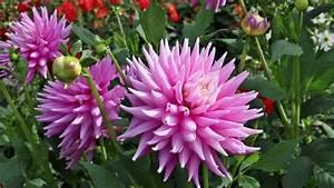 Blumen Im Garten : wundersch ne blumen im garten youtube ~ Bigdaddyawards.com Haus und Dekorationen