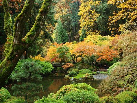 usa garden autumn portland japanese shrubs trees nature