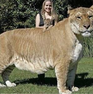 Biggest House Cat In The World 2017 - Interior Design