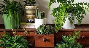 Arredare Con Piante Aromatiche ~ Idee per il design della casa
