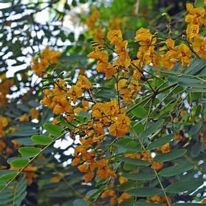Busch Mit Gelben Blüten : la flore et la faune de l 39 le de t n riffe ~ Frokenaadalensverden.com Haus und Dekorationen