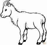 Billy Goat Coloring 12kb 1500 sketch template