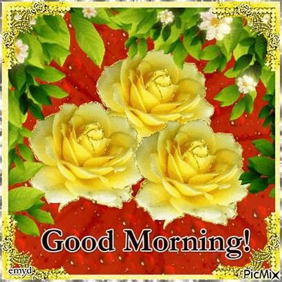 Morning Yellow Rose Roses Flower Picmix Lovethispic