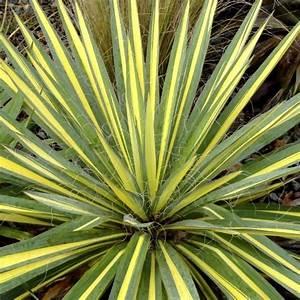 Plantes Exotiques Rustiques : achat plante exotique pivoine etc ~ Melissatoandfro.com Idées de Décoration