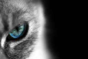 cats eye mythological beasties and co legends of the siamese cat