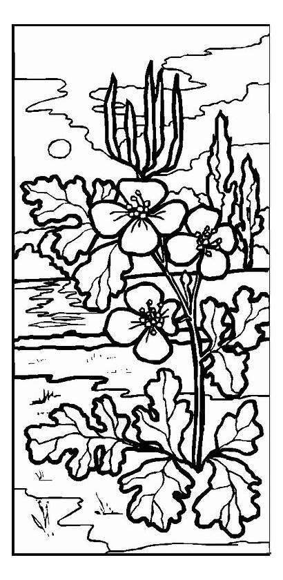 Diwarnai Untuk Gambar Landschaften Malvorlagen Landschappen Kaligrafi