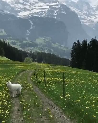 Nature Switzerland Travel Places Walking Bern Through