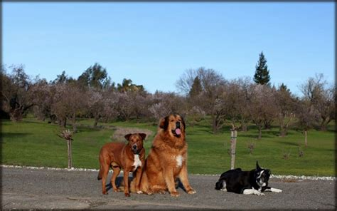 Dog Training Sacramento  Superdog. Fire Restoration Services Nd State University. Online Masters In Art History. The Global Competitiveness Report. Abortion Gestational Limits Atf Oil Change. Notice And Proof Of Claim For Disability Benefits. Quickbooks Proadvisor Reviews. Office Cleaning Service Chicago. Best Online School For Business Administration