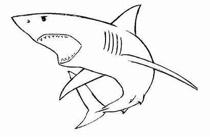 Shark Mouth Drawing Open Drawings Cartoon Sharks