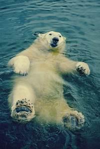 Tundra Animals L 39 Ours Polaire En 44 Photographies Uniques Archzine Fr