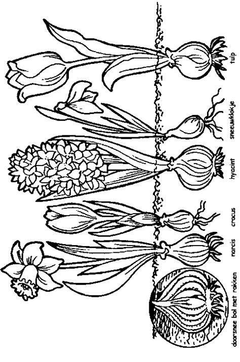 Kleurplaten Bloemen Tulpen.Vaak Kleurplaat Bloemen In Vaas Lq06 Classy World