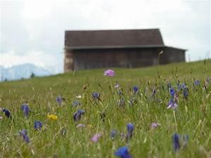 Pflanzen Bestimmen Nach Bildern : ein einblick in die schatzkammer der natur alpenblumen pflanzen magazin pflanzen ~ Eleganceandgraceweddings.com Haus und Dekorationen