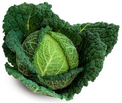 cuisiner un chou vert une large gamme de légumes jardins de créances