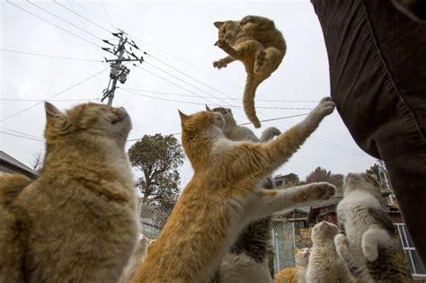Kaķu armija iekaro nomaļu salu, atstājot iedzīvotājus ...