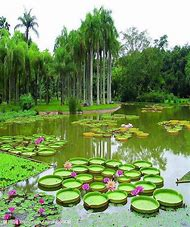 Beautiful Lily Pad Garden
