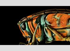 Microsculpture The insect photography of Levon Biss