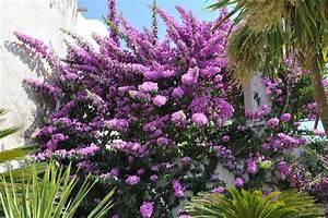 Arbuste Plein Soleil Longue Floraison : arbuste fleurs violettes liste ooreka ~ Premium-room.com Idées de Décoration