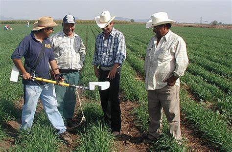 stanford study farmer networks key  innovation