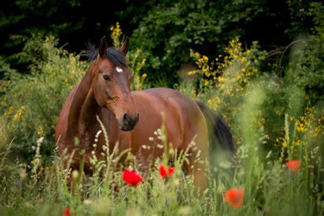 die vermeidung von blaehungen beim pferd