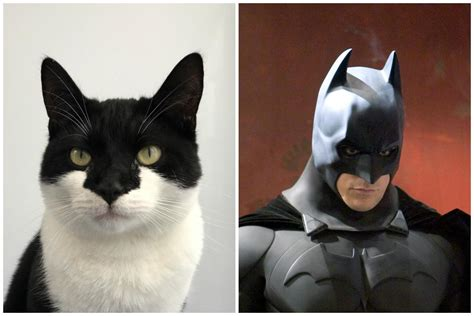 Its Batcat Wood Green Cat With Striking Resemblance To