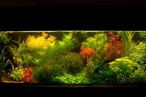 Co2 Rechner Aquarium : aquarium besatz rechner tobi s flussufer panorama flowgrow aquascape aquarien datenbank die ~ Orissabook.com Haus und Dekorationen