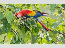 Wiki Aves de Colombia – Universidad Icesi – Cali, Colombia
