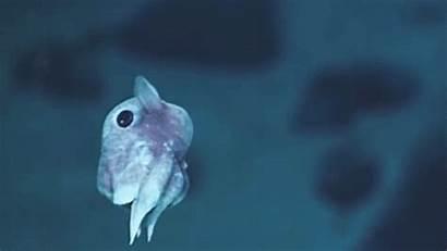 Squid Gifs Octopus Sea Deep Dumbo Animals