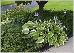 Feng Shui Garten Pflanzen : pflanzen garten nach feng shui garten house und dekor galerie qz4l8jb45g ~ Bigdaddyawards.com Haus und Dekorationen