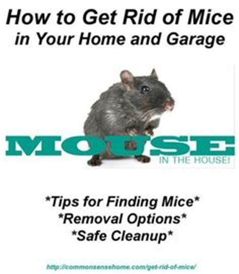 getting rid of rats see the bottom of the article for lowe s tips on rodent proofing with recommendations on which