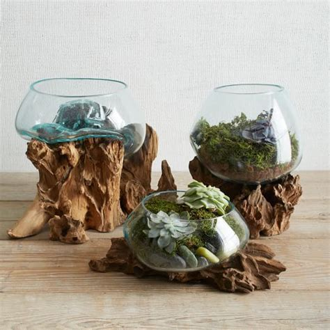 Wood   Glass Terrariums   west elm