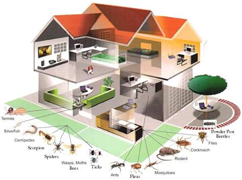 What You Need To Know About Pest Building Inspection  What Do. College Class Schedule Maker Im Locked Out. Colleges In Washington Dc Area. Locksmith Elmwood Park Nj Odu Nursing Program. Vmware Storage Appliance Advertising For Apps. Take Over Home Loan Payments Local Car Ads. Mapfre Travel Insurance Odds Of A Hole In One. Internet Providers Winston Salem Nc. Nyc Criminal Defense Lawyer What Is Hyperion