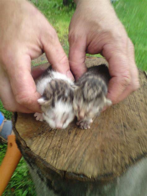 Zu Verschenken by Kleine Babykatzen Zu Verkaufen